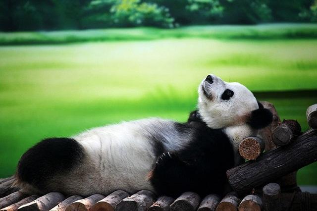 baddi and pandav lila