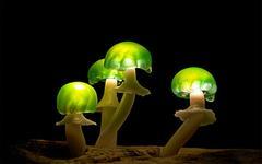 Люминесцентные чудо-грибочки