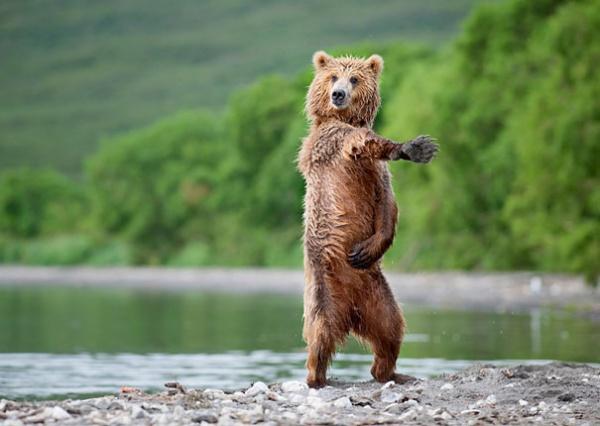 Забавные медвежата!