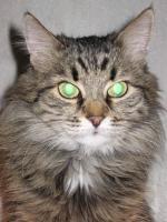 Мое фото Сумчатая Кошка  C.B.