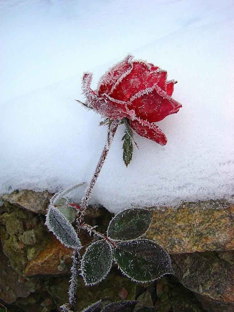 Зима близко: 5 ошибок пары, которые приводят к холоду в постели