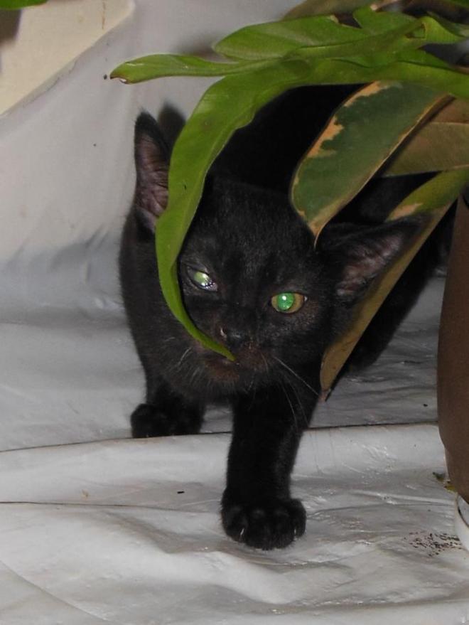 больной глазик у котёнка 3