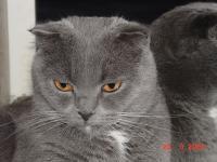 Мое фото Sонник