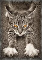 Мое фото кот 1975