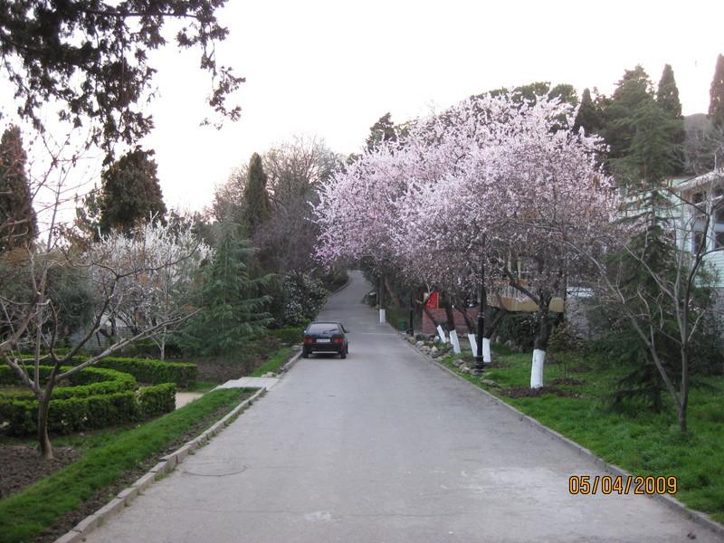 ялта в апреле фото