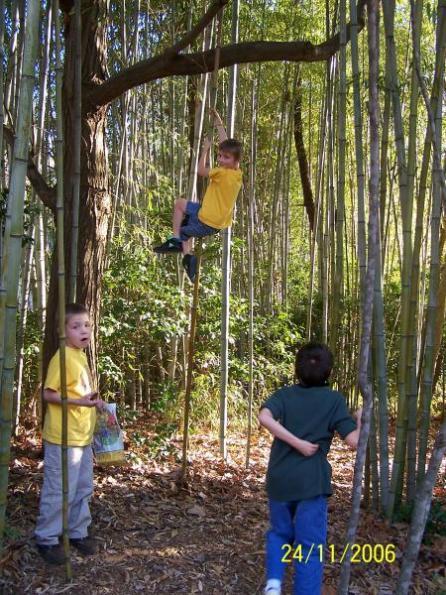 Павлик на бамбуке