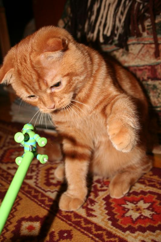 С любимой игрушкой...