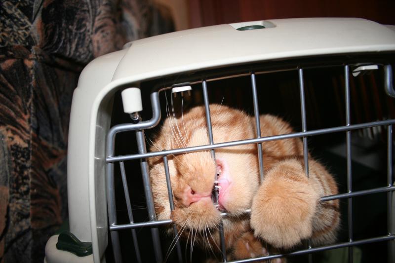 Изверги... ;) Загнали зверятку в клетку...