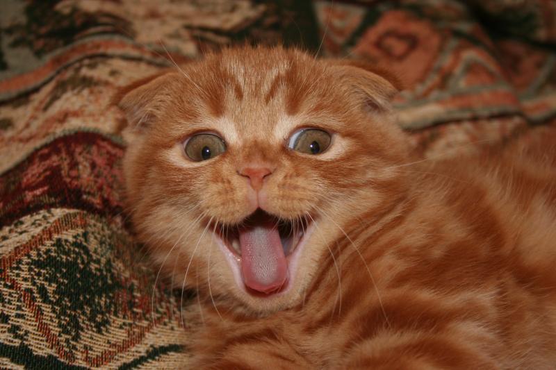 А так мы зеваем... :)