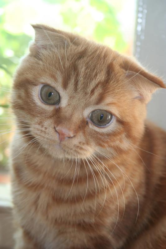 Кошка на окошке...