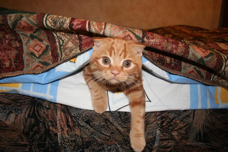 Помогаем застилать кровать... :)