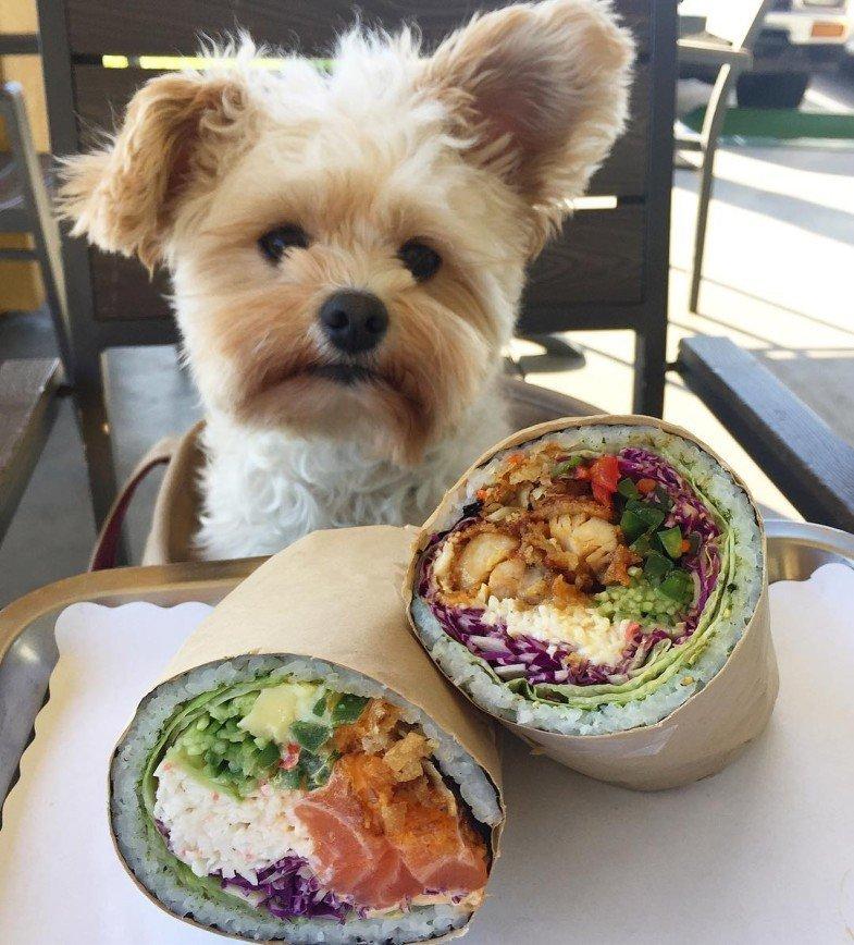 Бездомный пес стал заядлым посетителем ресторанов