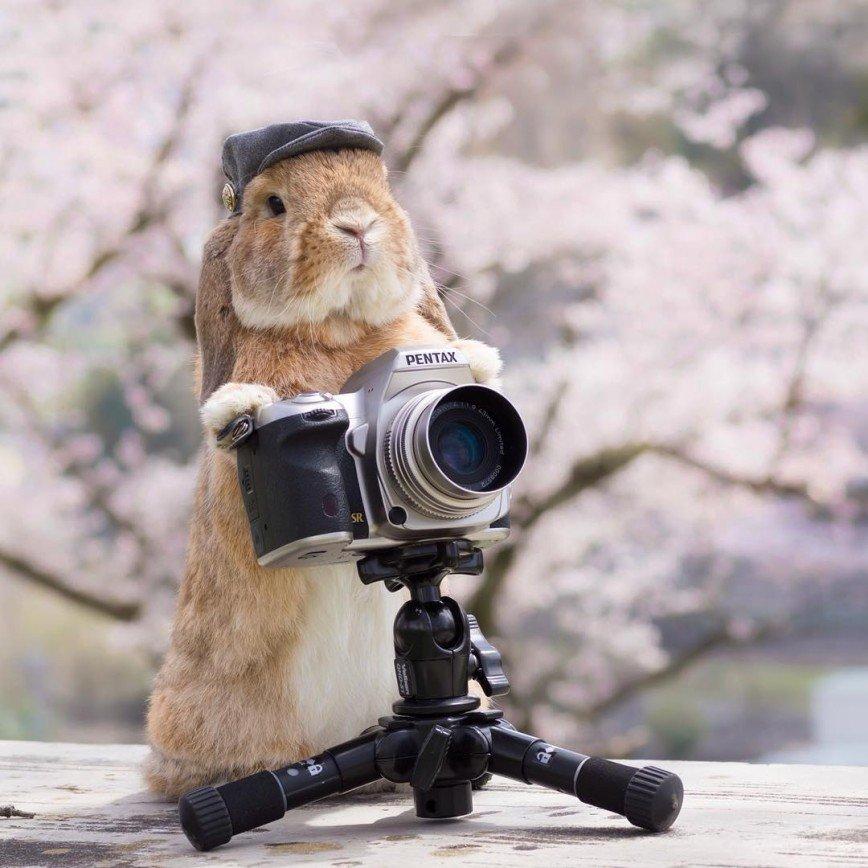 Стильный кролик из Японии