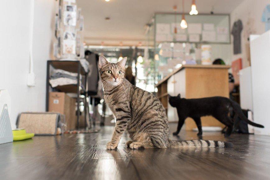 Магазинные коты Нью-Йорка: