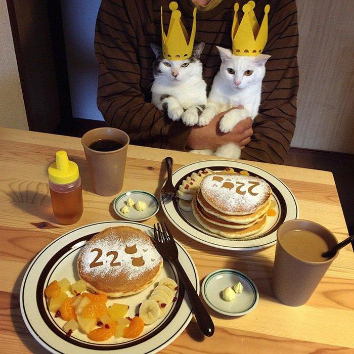 Очень забавные котики из Японии