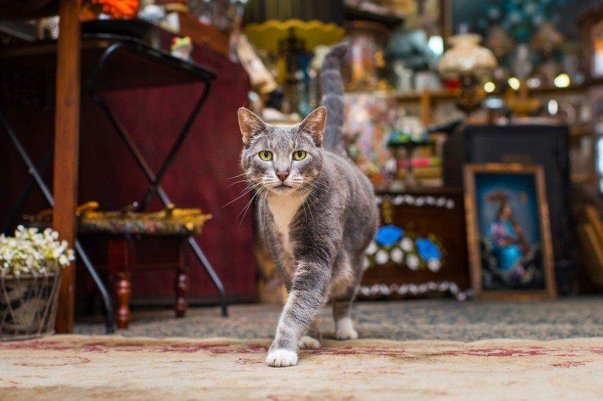 Магазинные коты Нью-Йорка