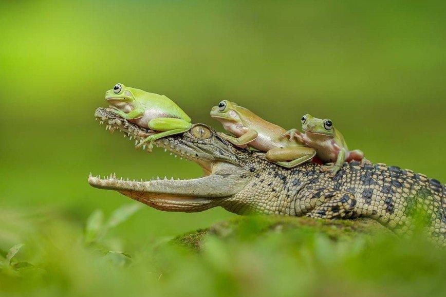 Три лягушки под окном...
