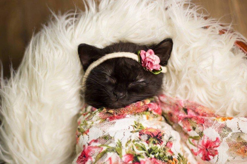 Мимимишные фотографии маленькой кошечки