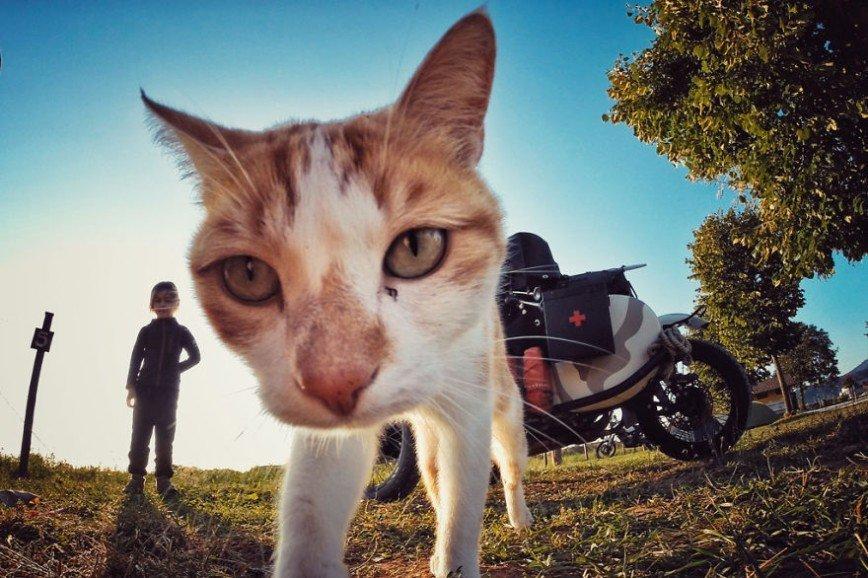 Путешествие по Европе на мотоцикле: [b][i]Итальянский кот[/b][/i]