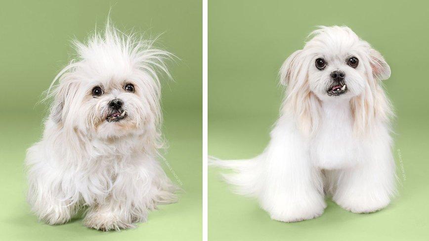 Фотографии собак до и после стрижки