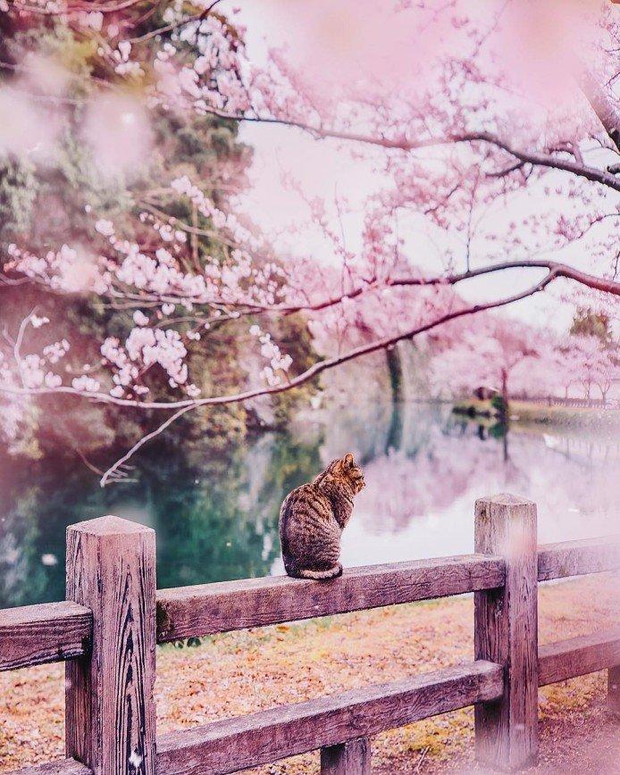 Японские каникулы Кристины Макеевой