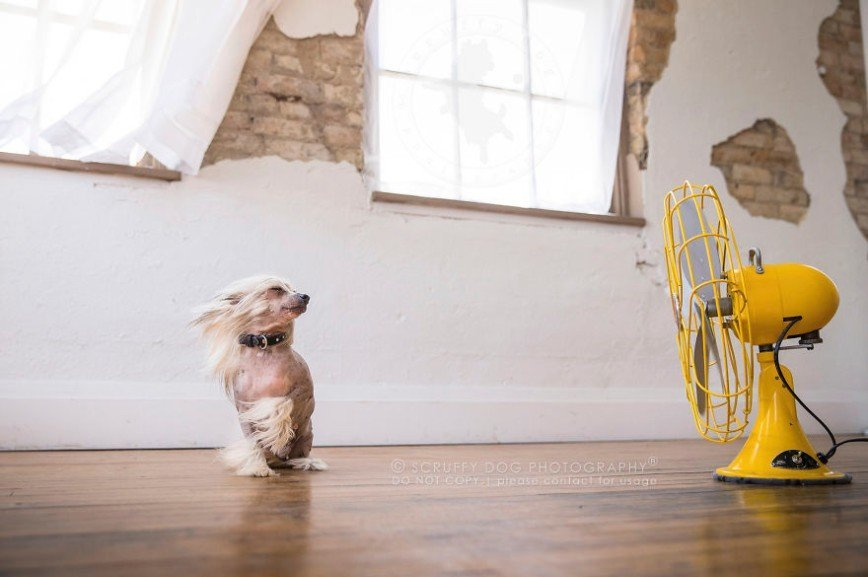 Красота собак в фотографиях