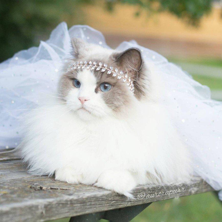 Кошка Аврора - настоящая принцесса