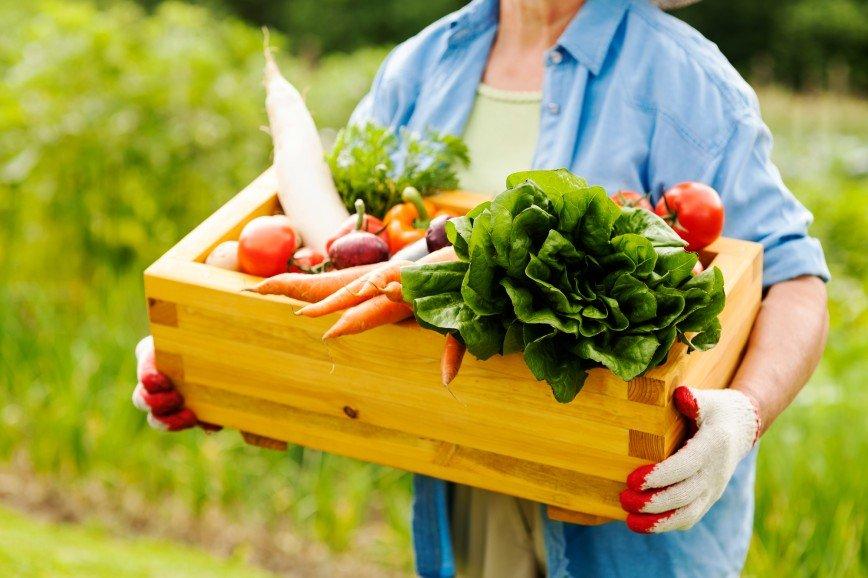 Простые рецепты: самодельные удобрения для огорода