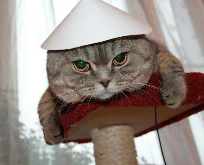 Автор: Moreomore, Фотозал: Домашние питомцы, Беня во вьетнамской шапке)