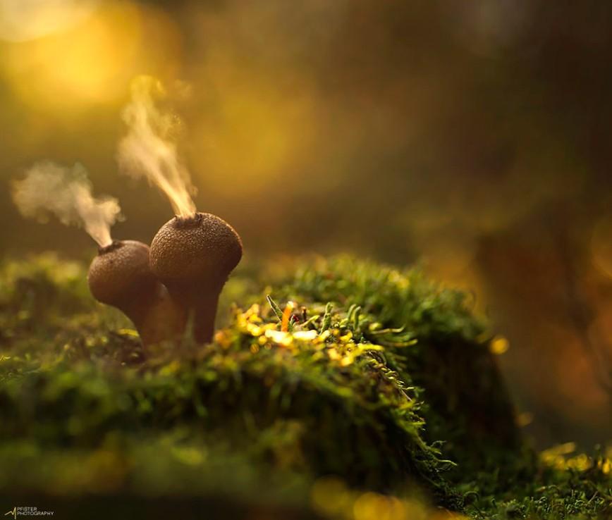 20 фотографий самых красивых грибов в мире: 2. Puffballs Дождевик.  Довольно известные и часто встречающиеся в наших краях грибы. Многие виды дождевиков — съедобные, вкусные грибы,