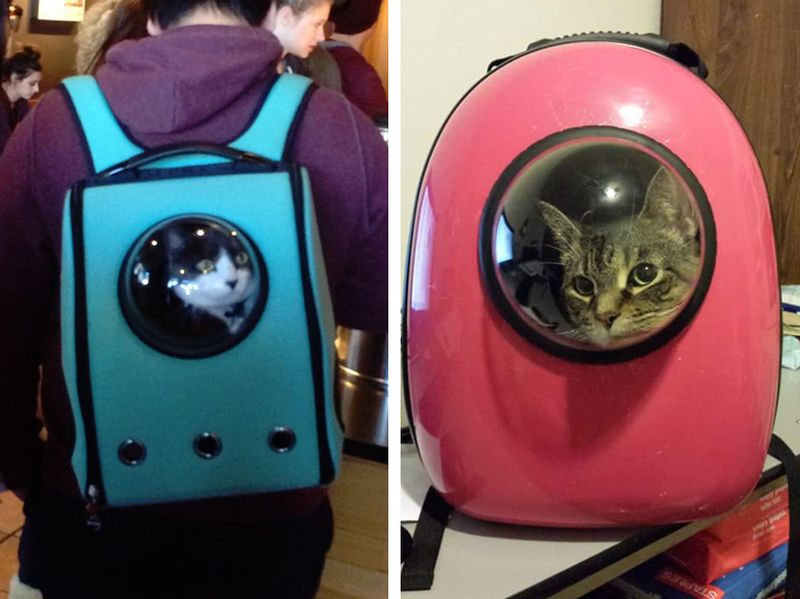 Переноски рюкзаки для кошек учебник рюкзаки